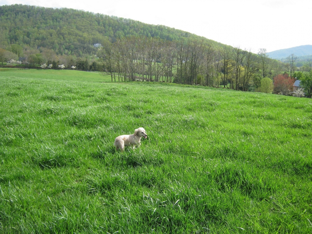 Carmeli at Mountain Vally Farm, Standardville - VA - Manchester Veterinary Clinic - CT