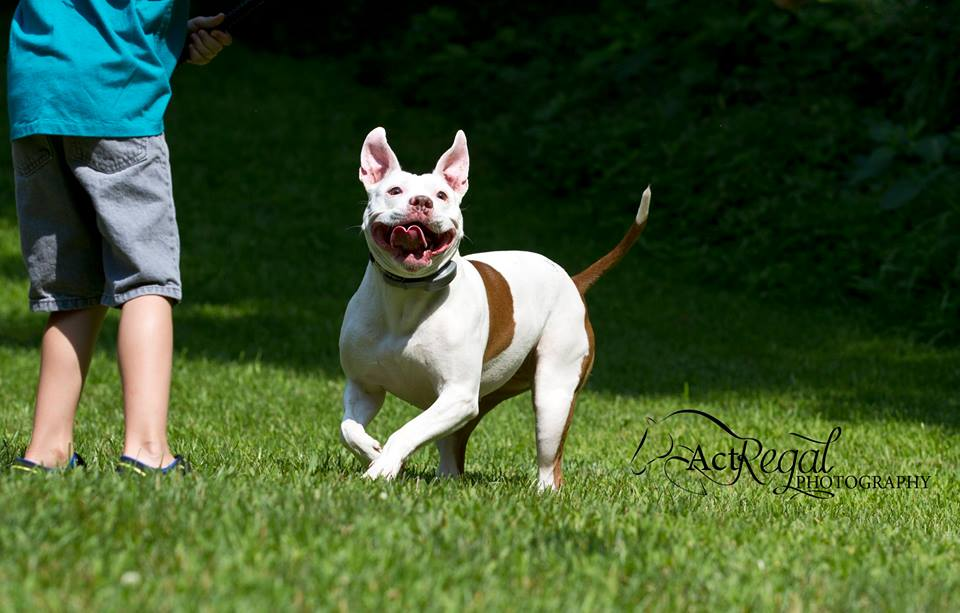Princess Eva Earlong's pitty smile - Photo taken by ActRegal Photography - Manchester Veterinary Clinic - CT