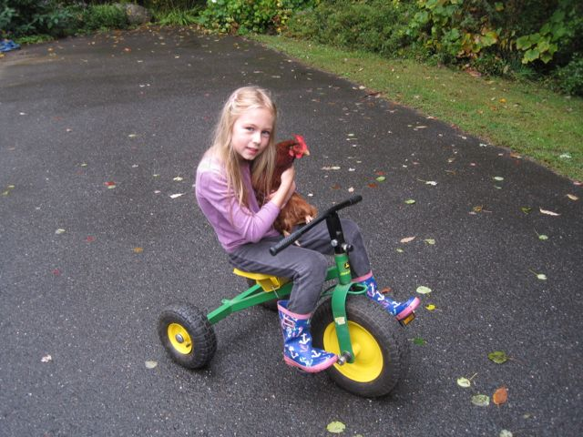 Dr. Smedley's daughter Lydia with one of their chickens - Manchester Veterinary Clinic - CT