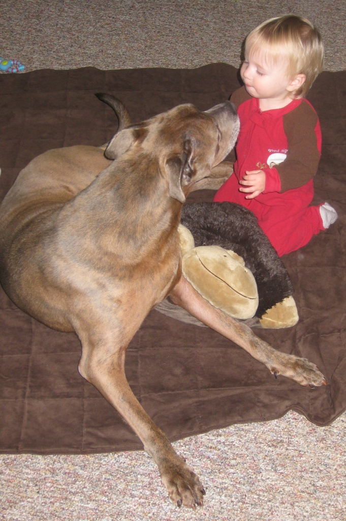 Cain, Erika's late Pit Bull & Mason at 18 months - Manchester Veterinary Clinic - CT - Trusted Vets For Your Pets